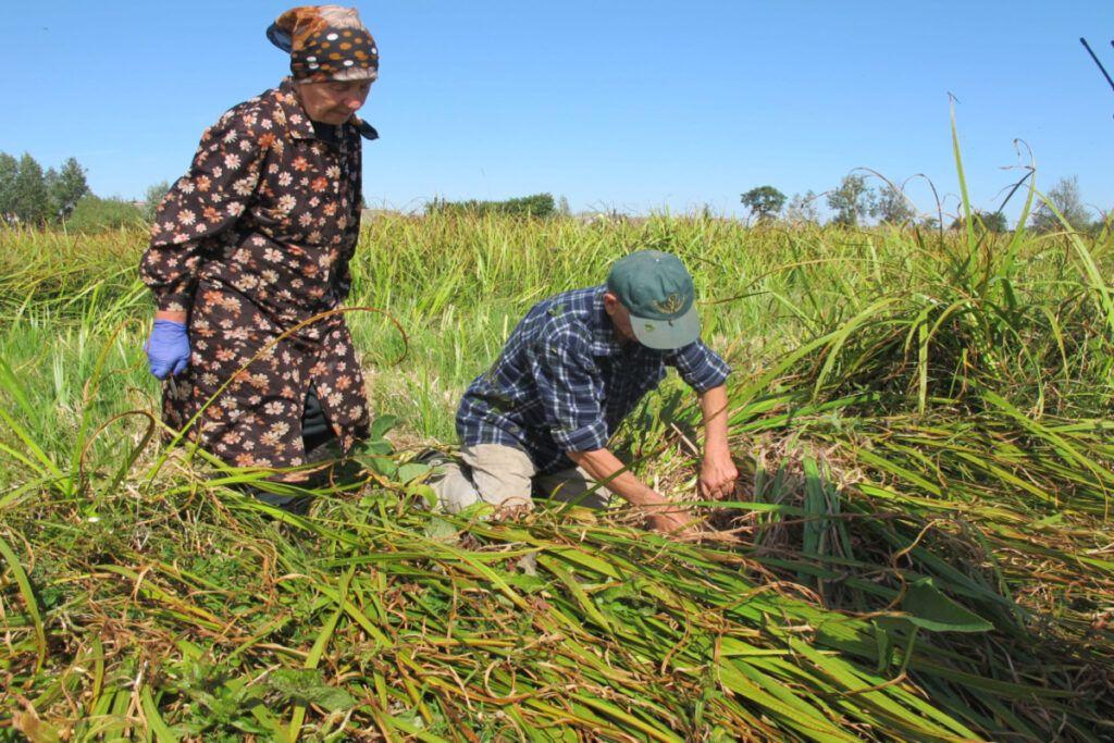 Proyecto de hierbas sostenibles - Herbal Academy
