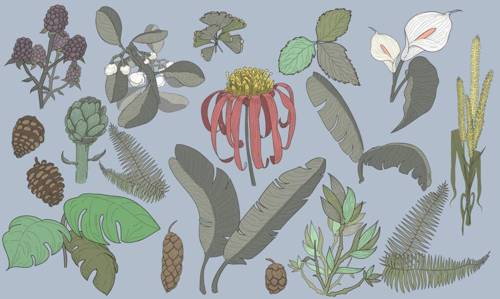 Limpieza y desintoxicación - WishGarden Herbs