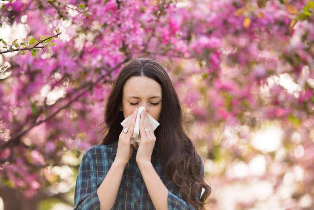 Tés de hierbas para las alergias estacionales