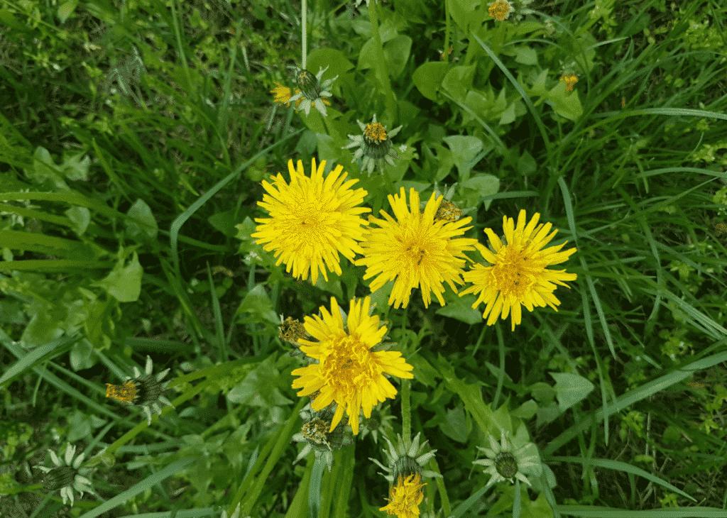 5 hierbas que amamos para el crecimiento primaveral